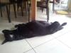 camerazoom-20120729152113342_0