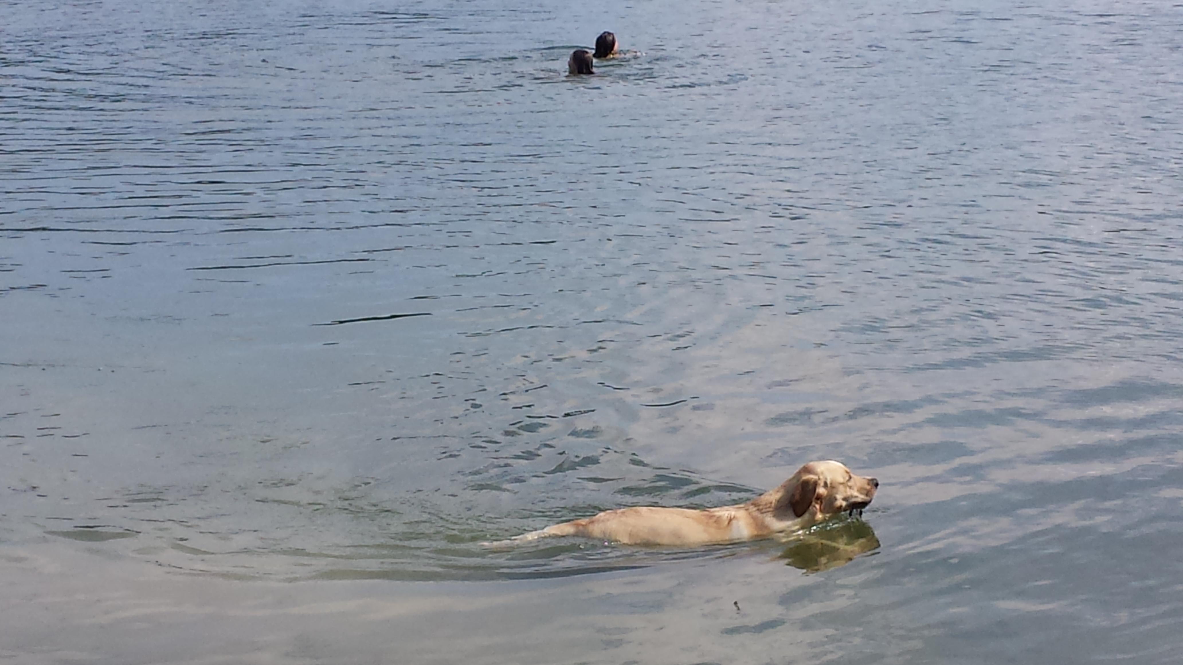 amberschwimmtvorbei